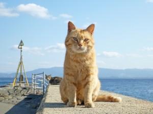 猫 待つ 画像