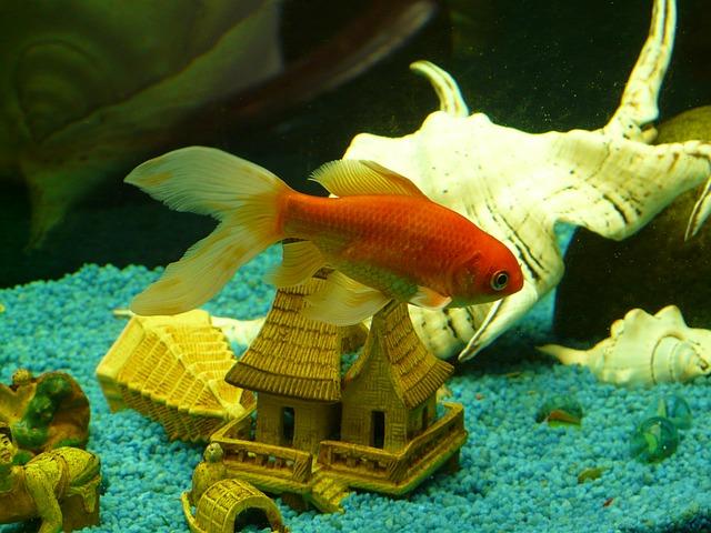 金魚すくい コツ